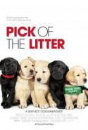 Pick of the Litter - Guide Dogs for the Blind! poster